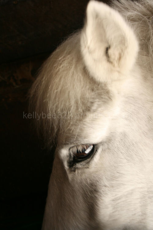 Whitey relaxes in his stall