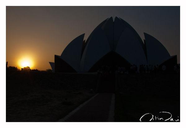 Lotus at dusk