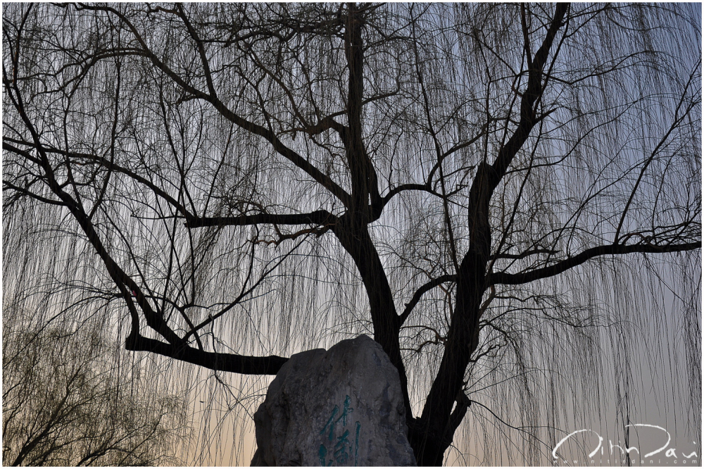houhai lake, beijing, tree, weeping alders, dusk