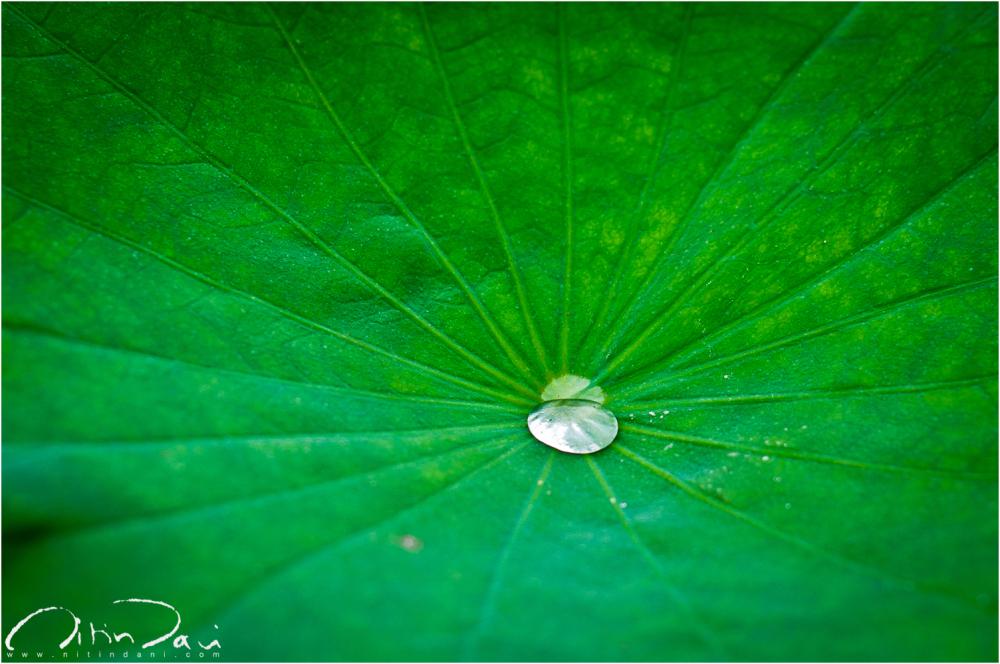 Drops in Anji 02