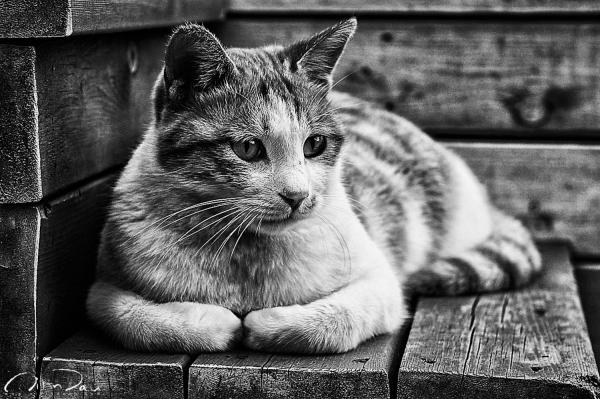 Lazy Cat 01