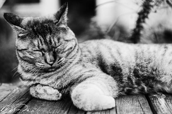 Lazy Cat 02
