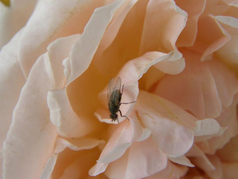 fly flower