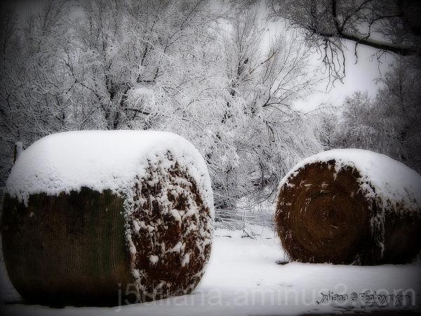snow hay