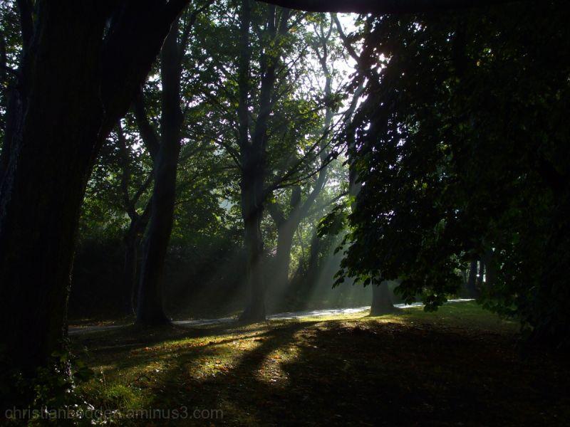 Misty morning on Woodhouse Moor