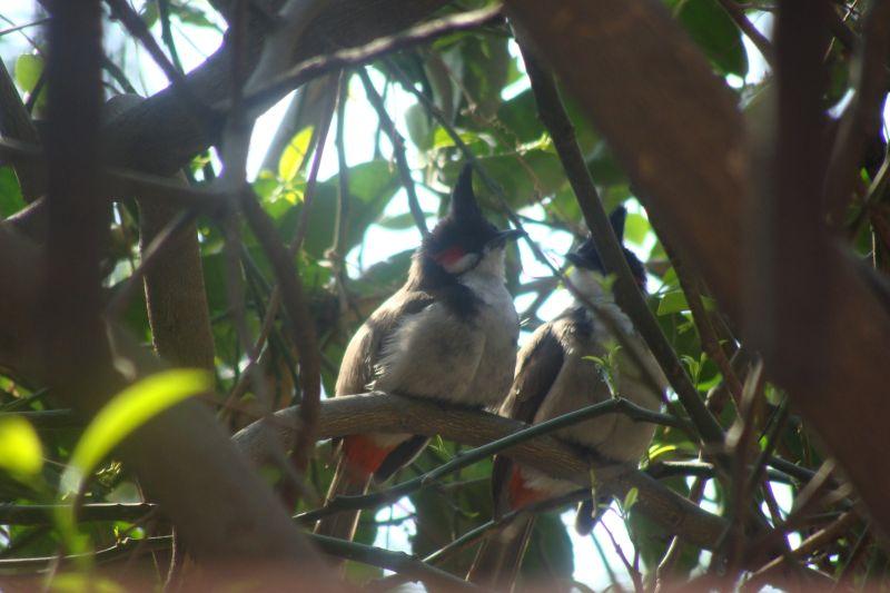 Birds,Nature,Beautiful Birds