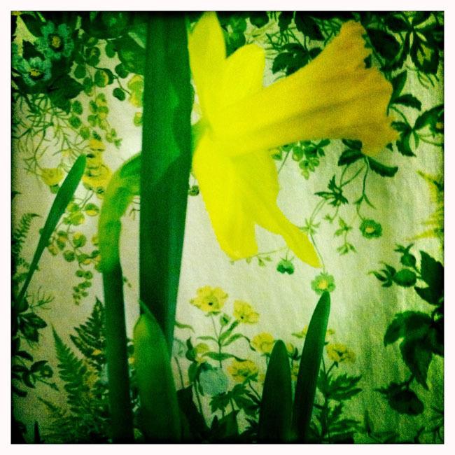 More Flower