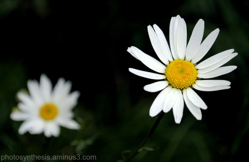 Yet another flower macro!
