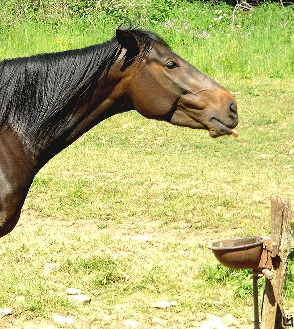 cheval impoli
