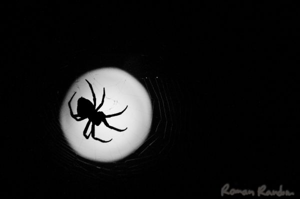 Spider with the moon for background