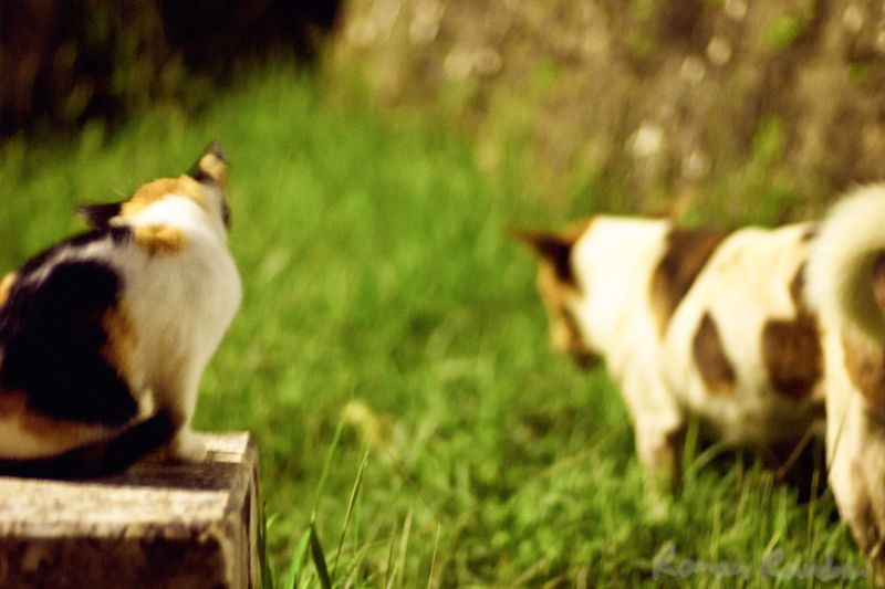 a dog and cat gang at night
