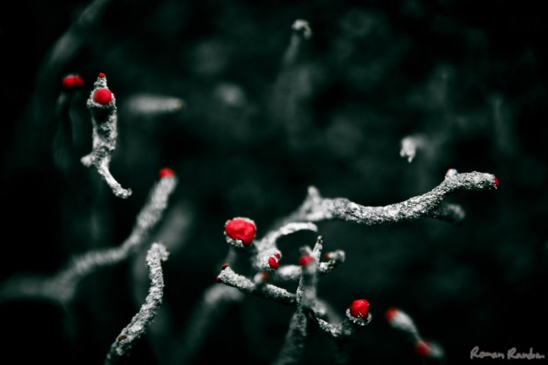 a blooming lichen