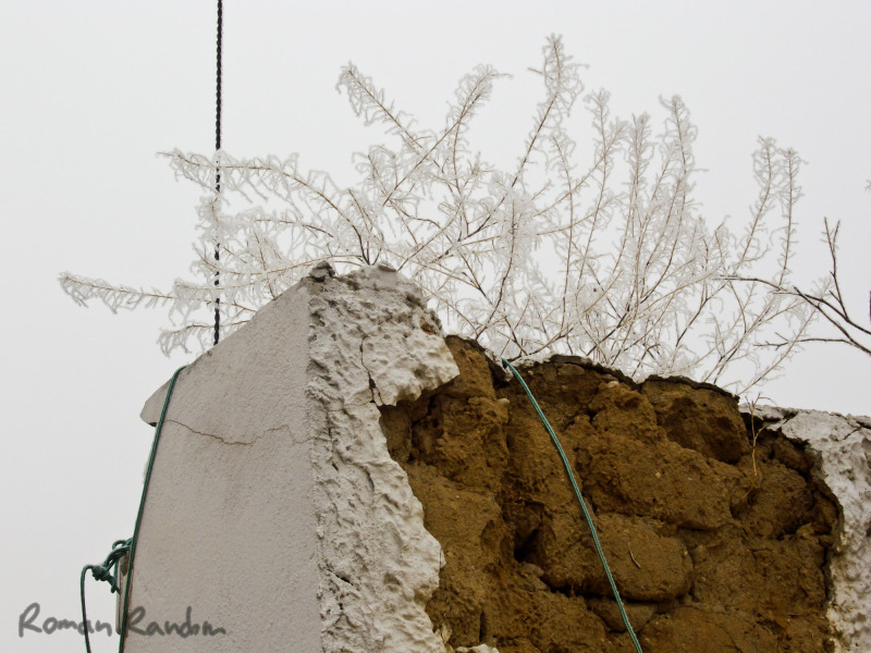 a plant covered by snow on a white wall