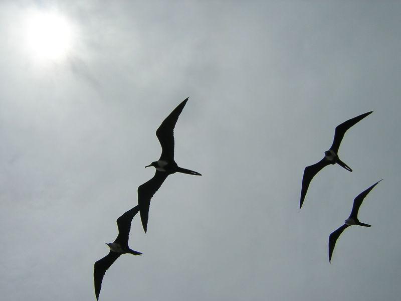 Yucatan oiseaux Mexique