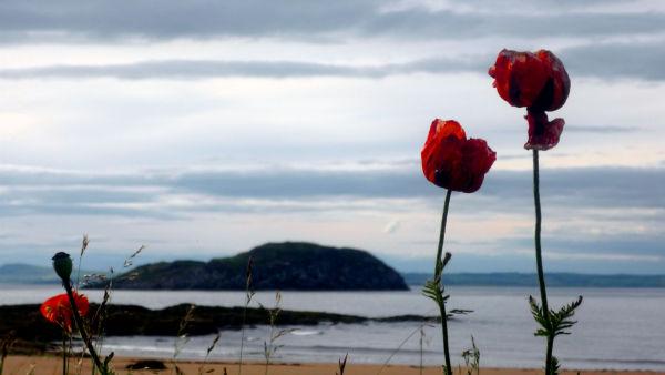 fleur North Berwick Ecosse