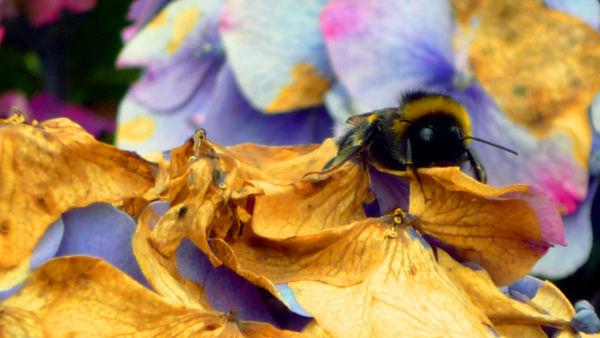 insecte fleur