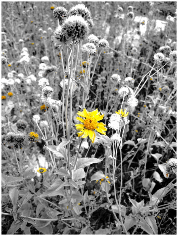 flower yellow different exception