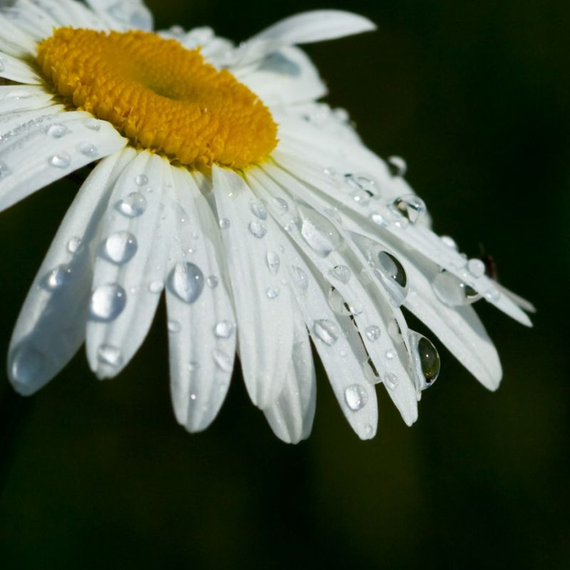 After the rain...