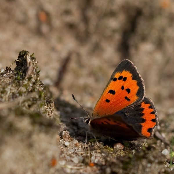 A very small butterfly (1/2)...
