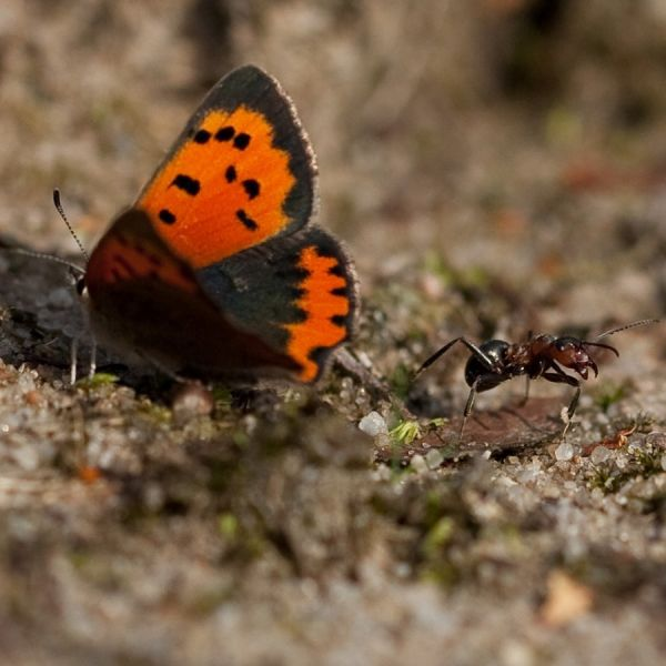 A very small butterfly (2/2)...