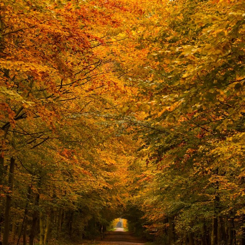 Tunnel of leaves...