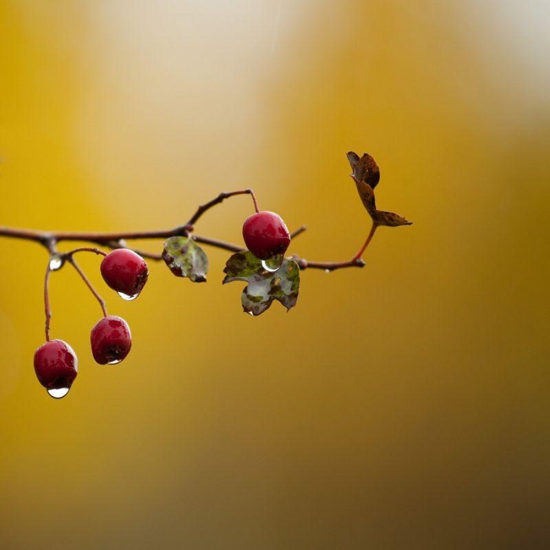 Autumn weather...