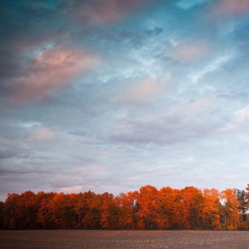 Autumn colors...