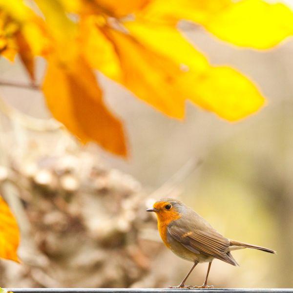 Autumn in the garden 1/3...