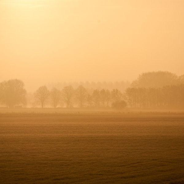 Morning light...