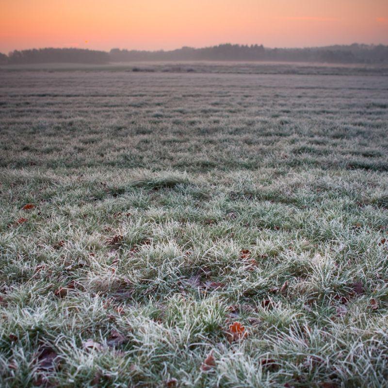 Frozen land...