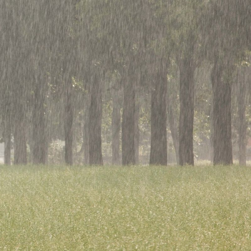 Rain and sunshine (2/2)...