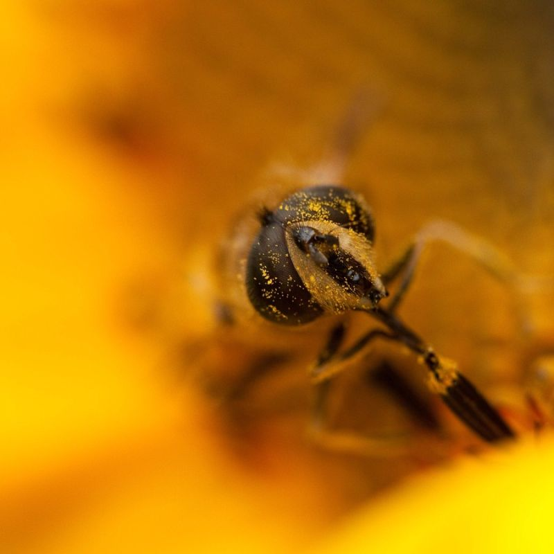 Enjoy the sunflower (2/2)...