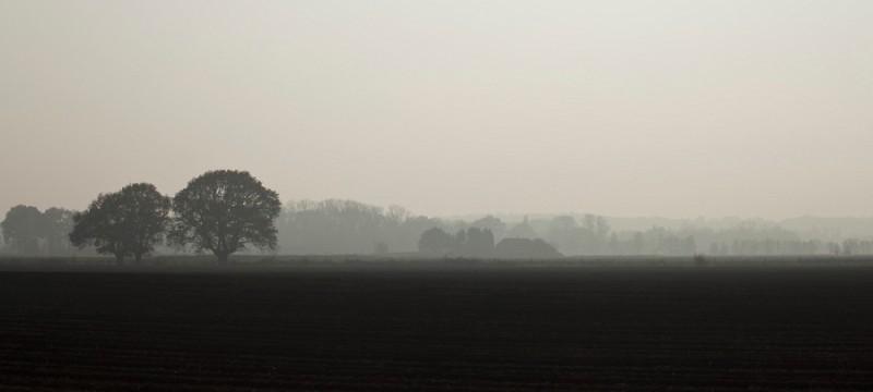Misty landscape...