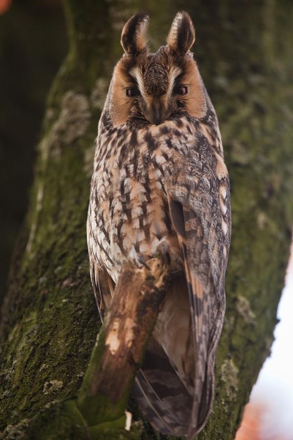 Owl (2)...