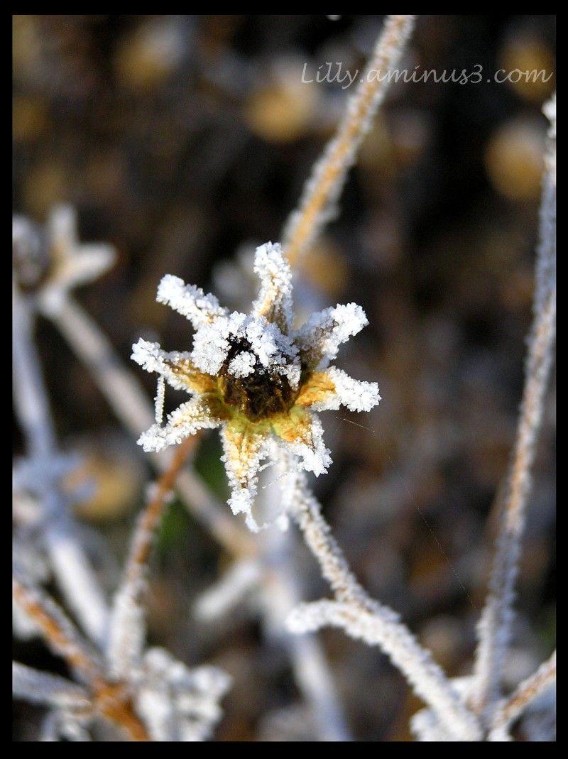 Nature gelée au jardin-3