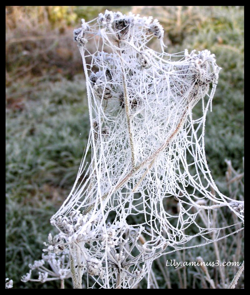 Nature gelée au jardin-4