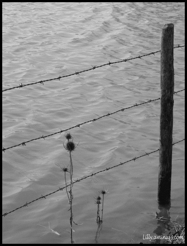 Loire en crue #2