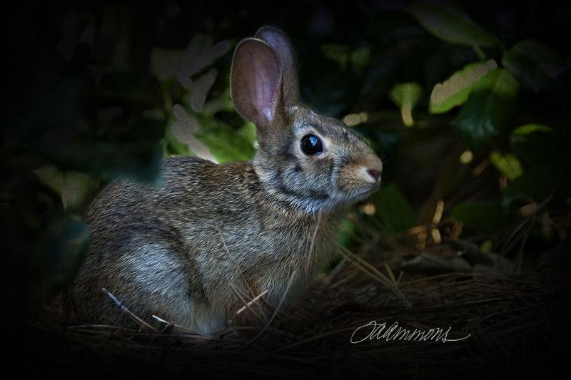 Rabbit, quote by Zora Neale Hurston