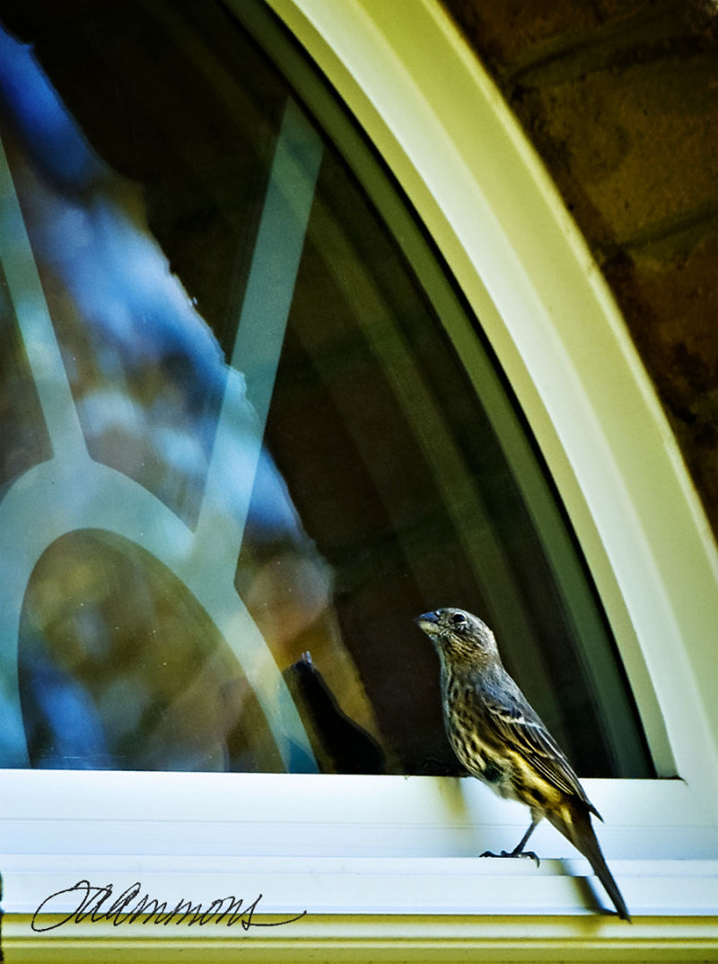 Bird at Window, quote by Tom Peters