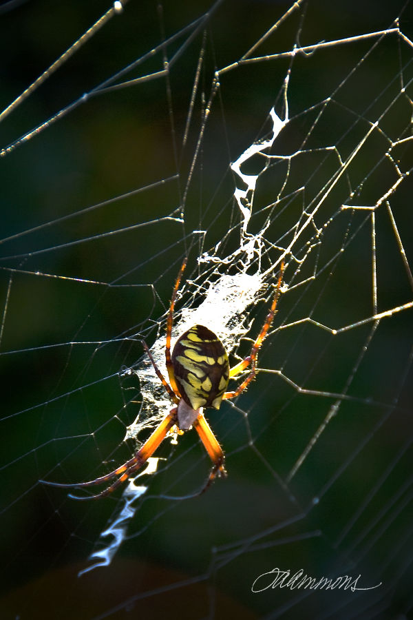spider in web, quote by Goldie Hawn