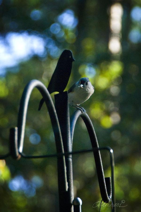 bird on feeder, quote by Albert Einstein