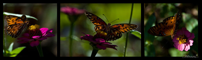 butterfly, quote by Edward Young