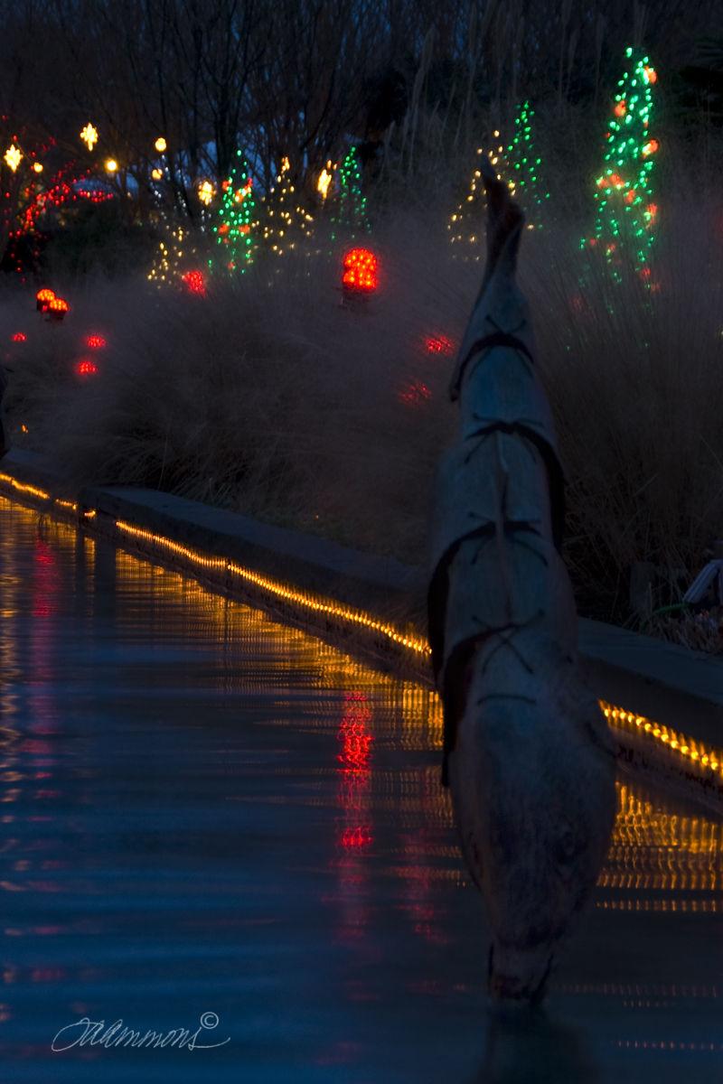 Christmas lights, lyrics O Christmas Tree