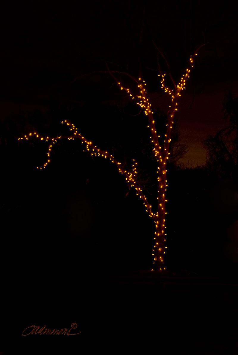 "Christmas Lights, lyrics ""Somewhere in the Night"""
