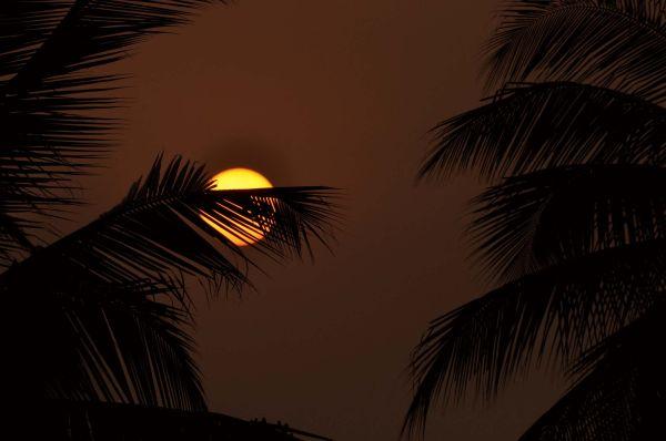 Sunrise at pollachi