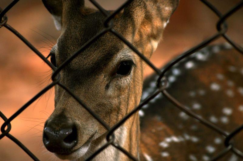 My dear. why u behind bars?