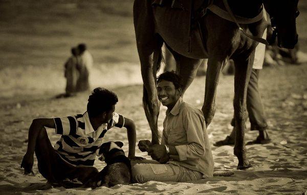 Horses on the beach...
