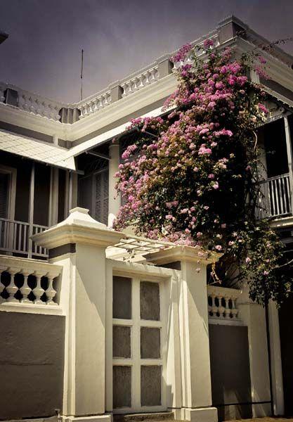 Bougainvilla on a villa...