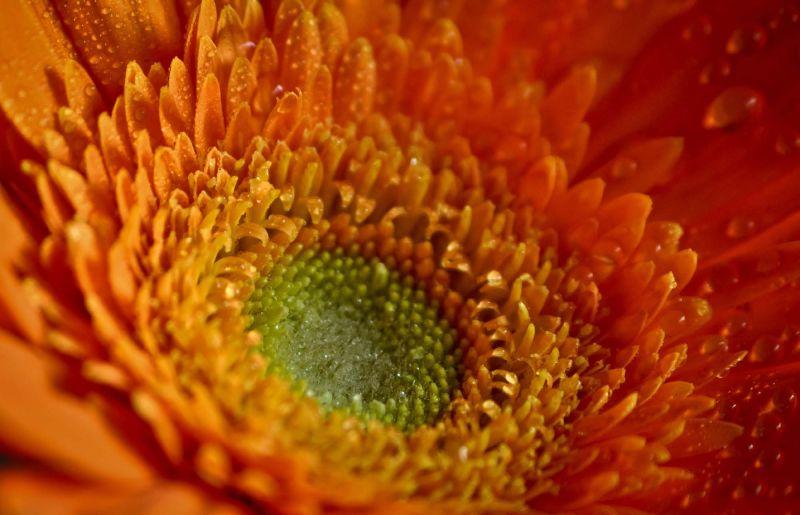 """Flowers - God""""s smiles"""