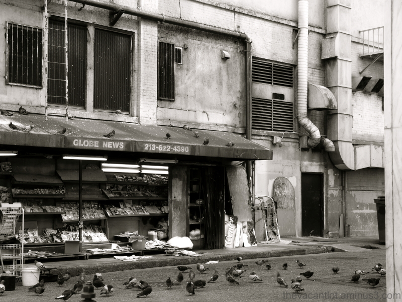 Newspaper Pigeons